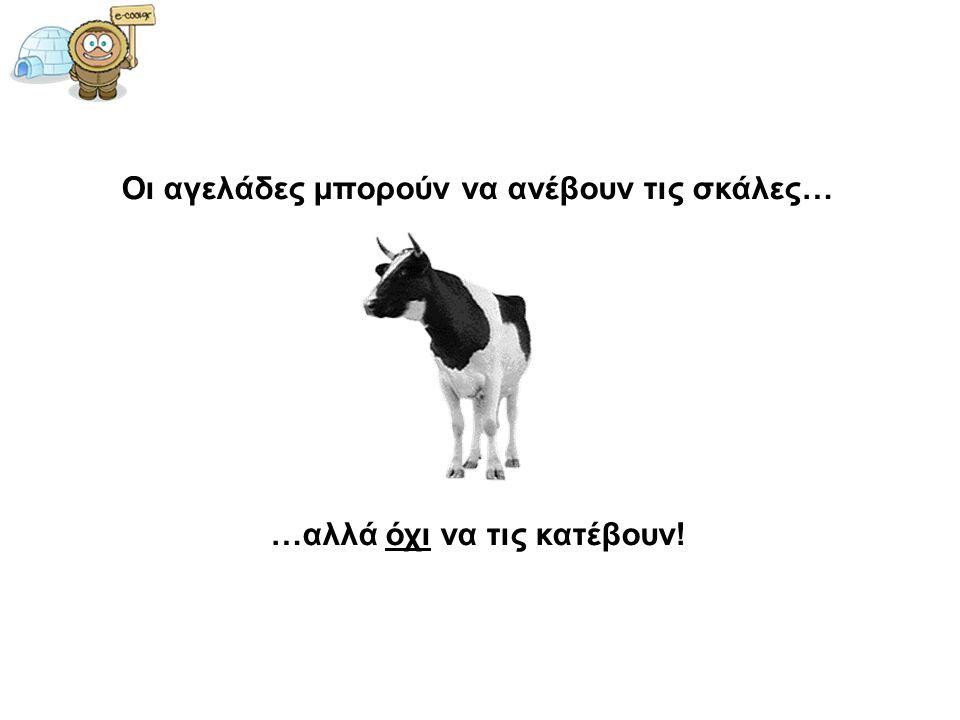 Οι αγελάδες μπορούν να ανέβουν τις σκάλες…