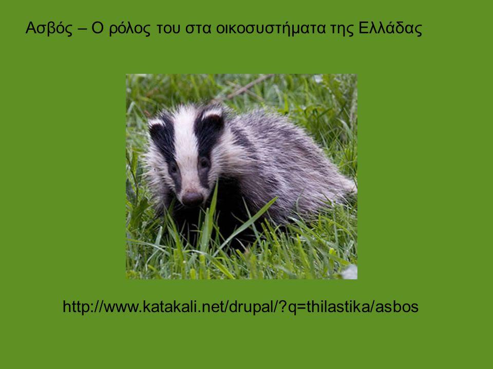 Ασβός – Ο ρόλος του στα οικοσυστήματα της Ελλάδας