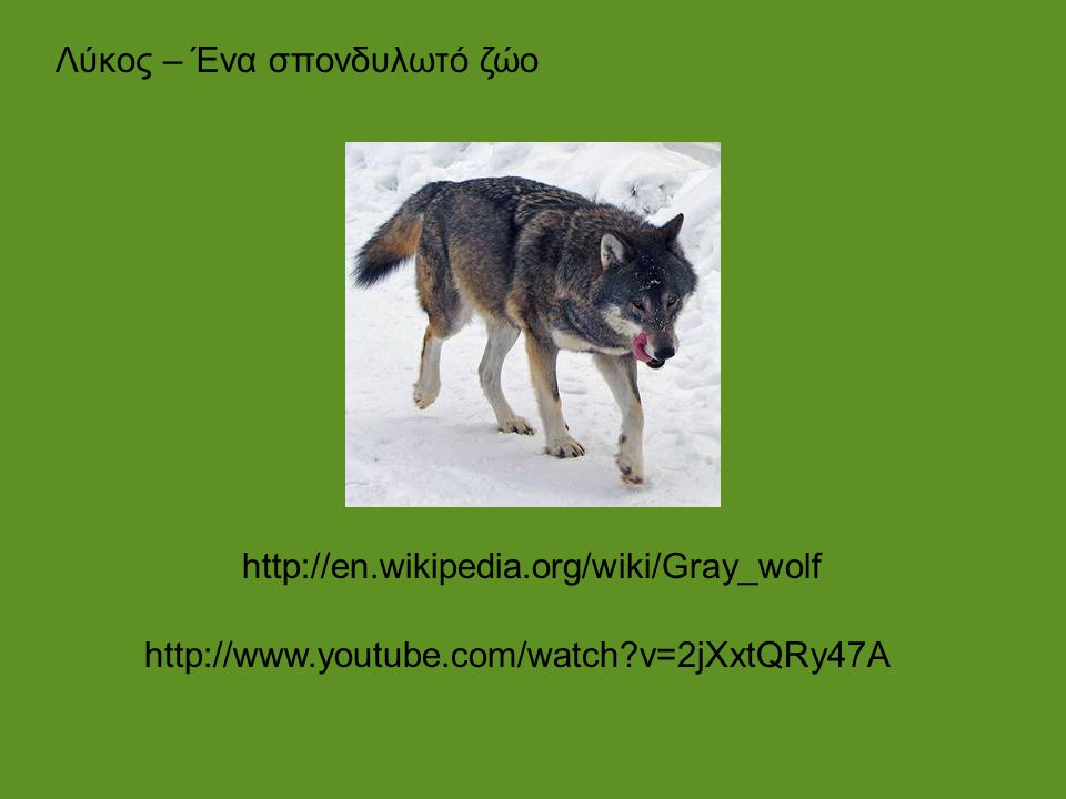 Λύκος – Ένα σπονδυλωτό ζώο