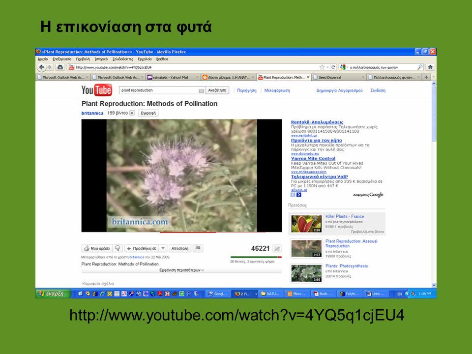 Η επικονίαση στα φυτά http://www.youtube.com/watch v=4YQ5q1cjEU4