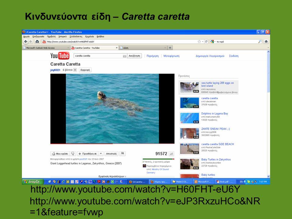 Κινδυνεύοντα είδη – Caretta caretta