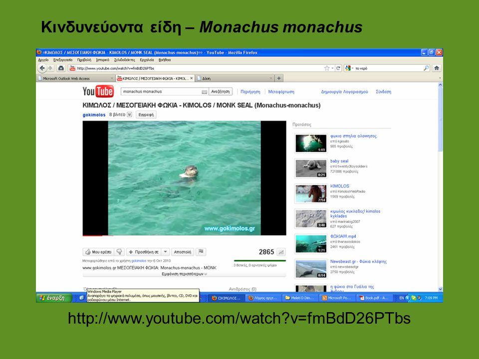 Κινδυνεύοντα είδη – Monachus monachus