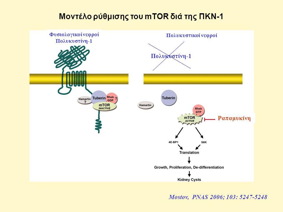 Μοντέλο ρύθμισης του mTOR διά της ΠΚΝ-1