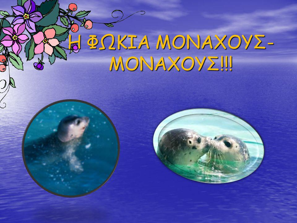 Η ΦΩΚΙΑ ΜΟΝΑΧΟΥΣ-ΜΟΝΑΧΟΥΣ!!!