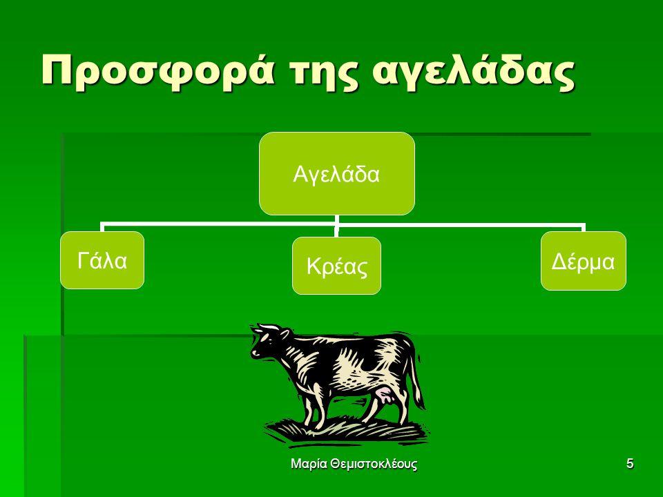 Προσφορά της αγελάδας Μαρία Θεμιστοκλέους
