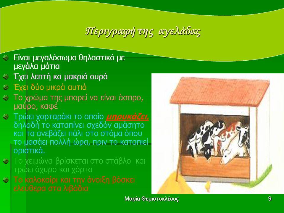 Περιγραφή της αγελάδας