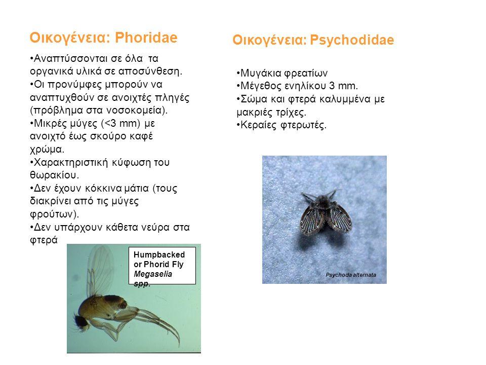Οικογένεια: Phoridae Οικογένεια: Psychodidae