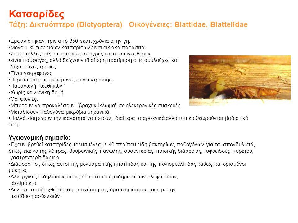 Κατσαρίδες Τάξη: Δικτυόπτερα (Dictyoptera) Οικογένειες: Blattidae, Blattelidae. Εμφανίστηκαν πριν από 350 εκατ. χρόνια στην γη.
