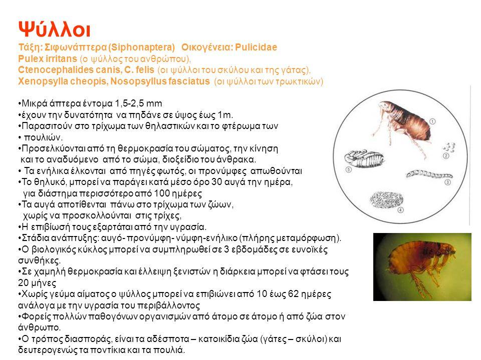 Ψύλλοι Τάξη: Σιφωνάπτερα (Siphonaptera) Οικογένεια: Pulicidae