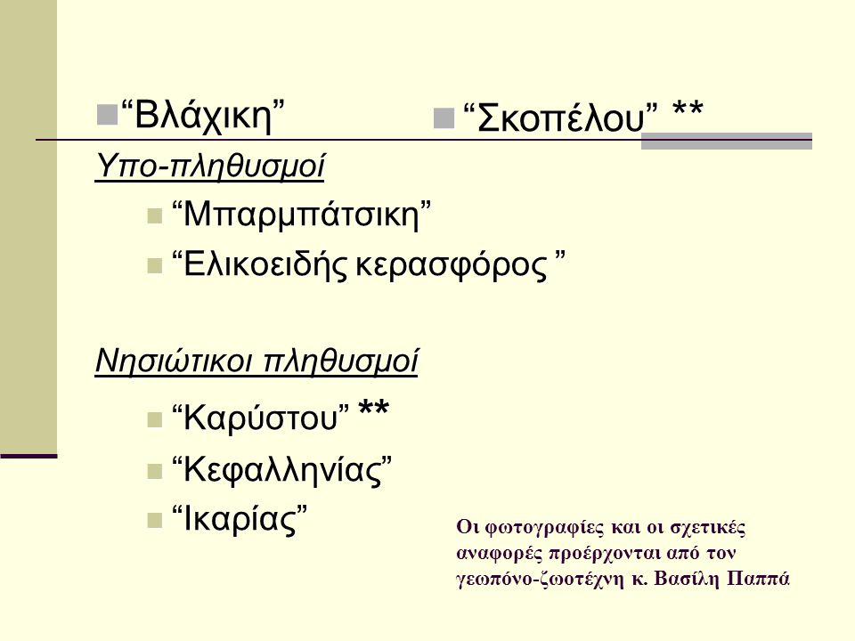 Βλάχικη Σκοπέλου ** Μπαρμπάτσικη Ελικοειδής κερασφόρος
