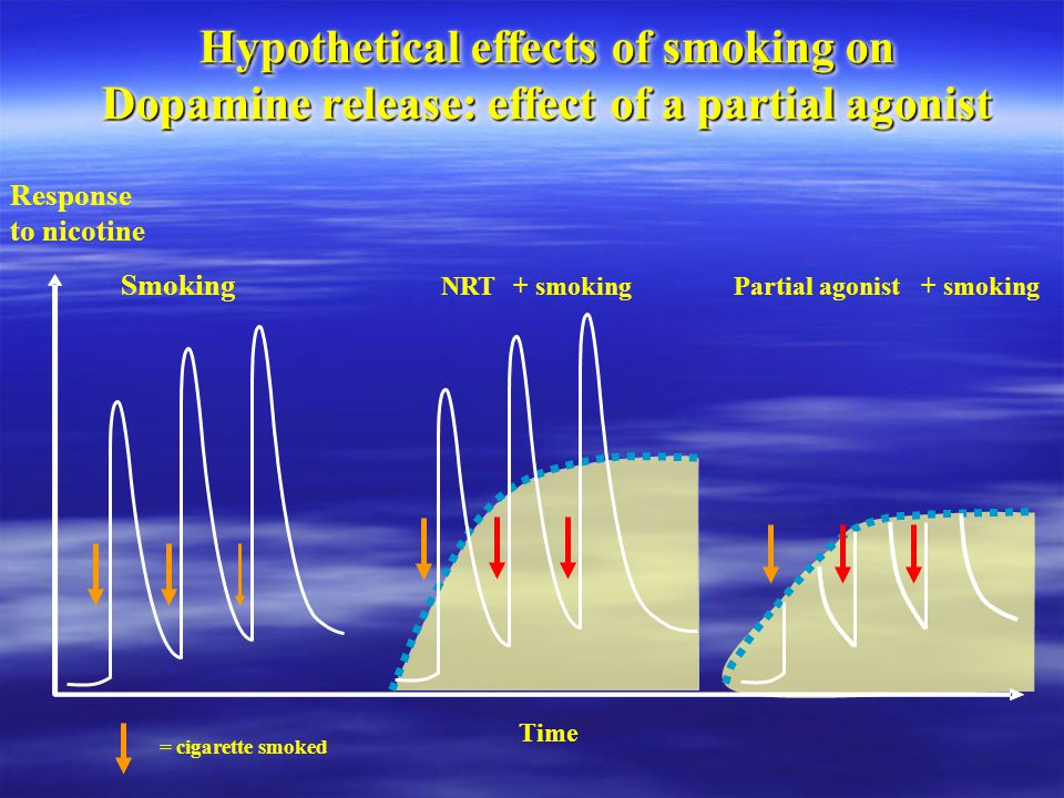 Hypothetical effects of smoking on Dopamine release: effect of a partial agonist