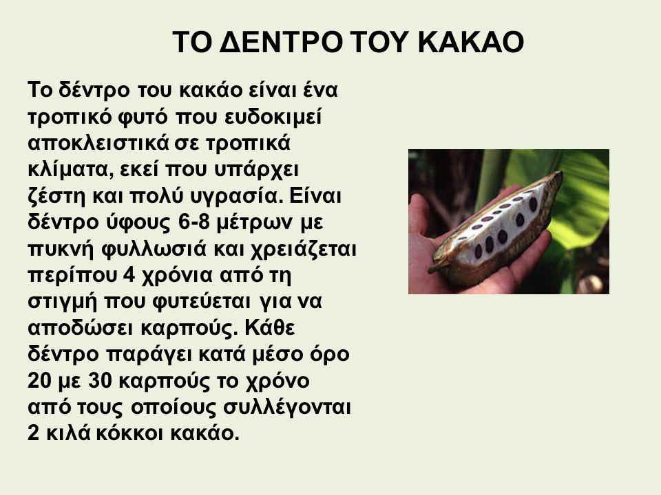 ΤΟ ΔΕΝΤΡΟ ΤΟΥ ΚΑΚΑΟ