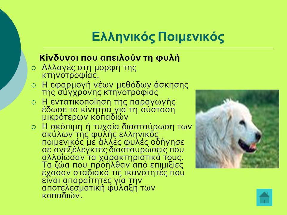 Ελληνικός Ποιμενικός Κίνδυνοι που απειλούν τη φυλή