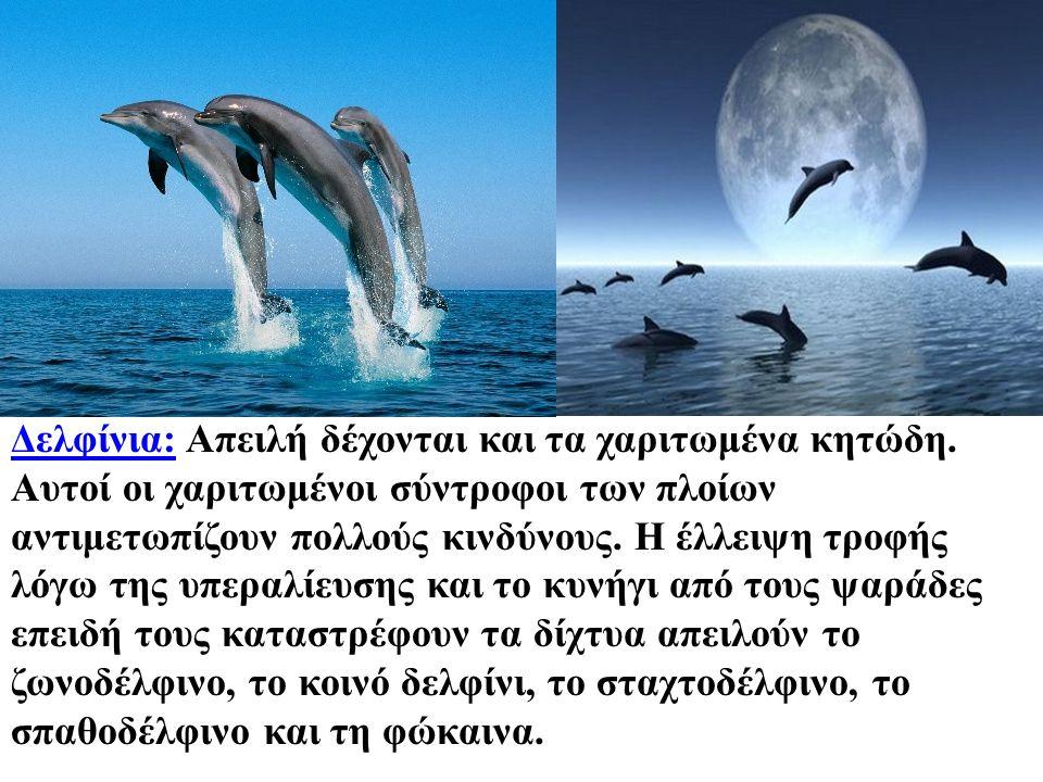 Δελφίνια: Απειλή δέχονται και τα χαριτωμένα κητώδη