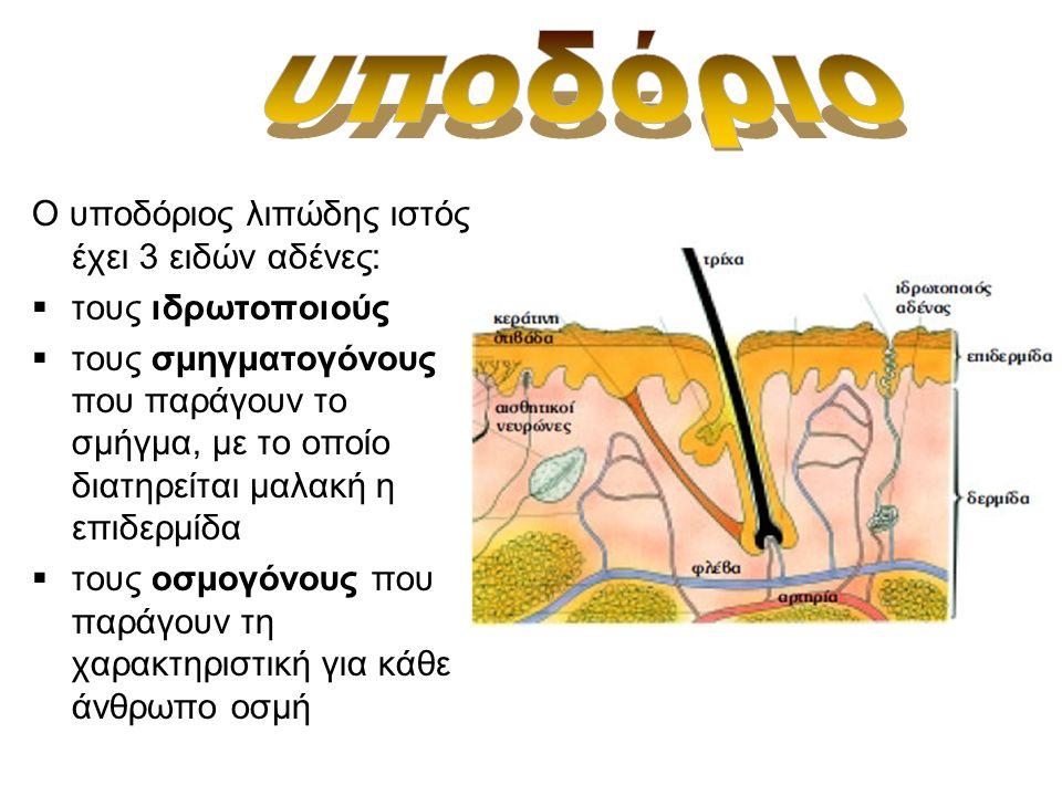 υποδόριο Ο υποδόριος λιπώδης ιστός έχει 3 ειδών αδένες: