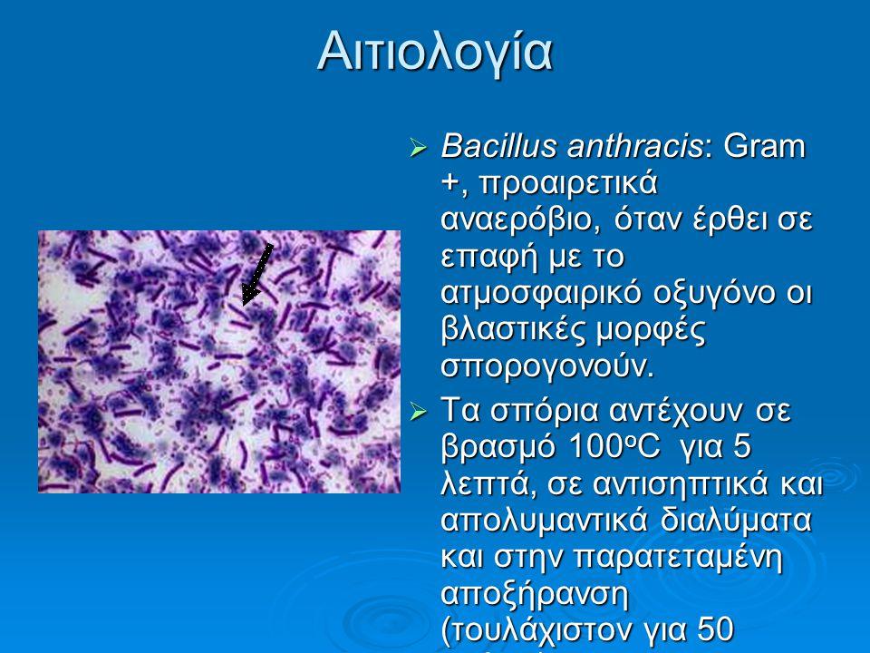 Αιτιολογία Bacillus anthracis: Gram +, προαιρετικά αναερόβιο, όταν έρθει σε επαφή με το ατμοσφαιρικό οξυγόνο οι βλαστικές μορφές σπορογονούν.