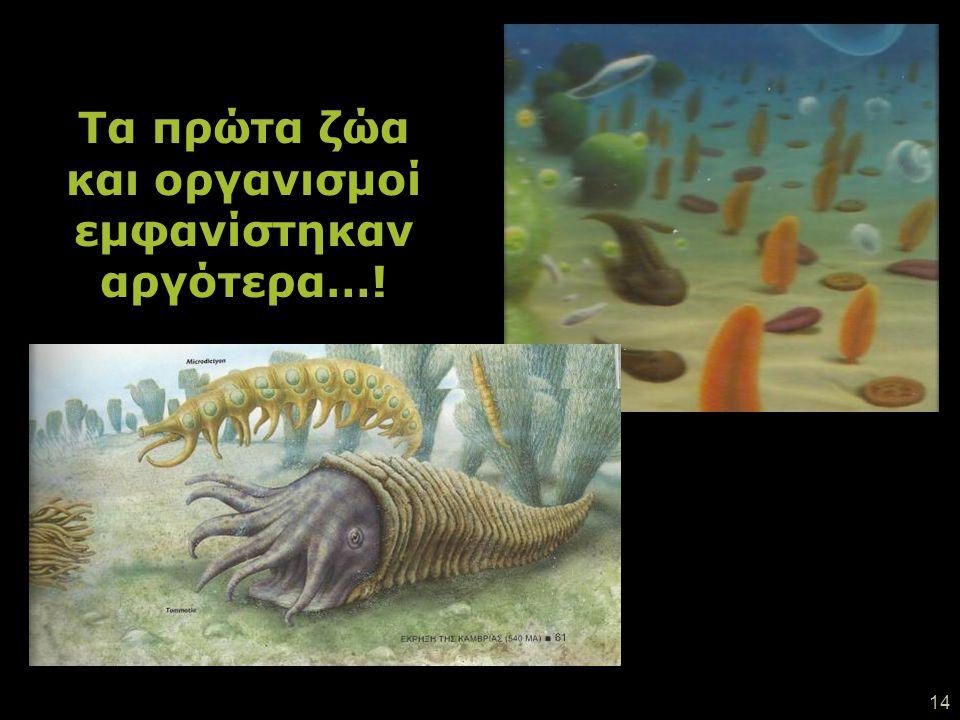 Τα πρώτα ζώα και οργανισμοί εμφανίστηκαν αργότερα…!