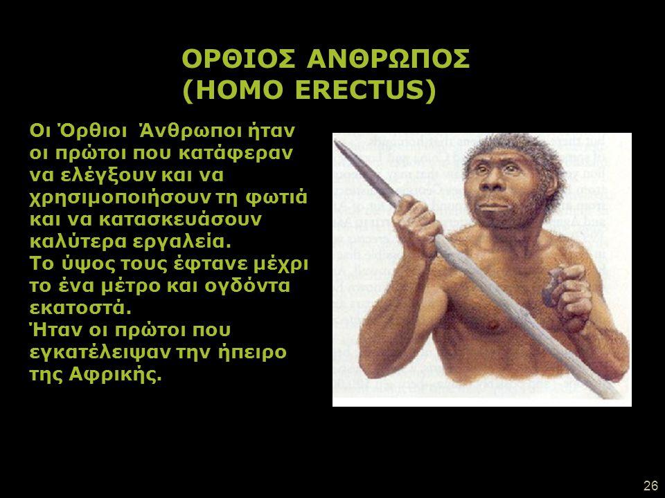 ΟΡΘΙΟΣ ΑΝΘΡΩΠΟΣ (HOMO ERECTUS)