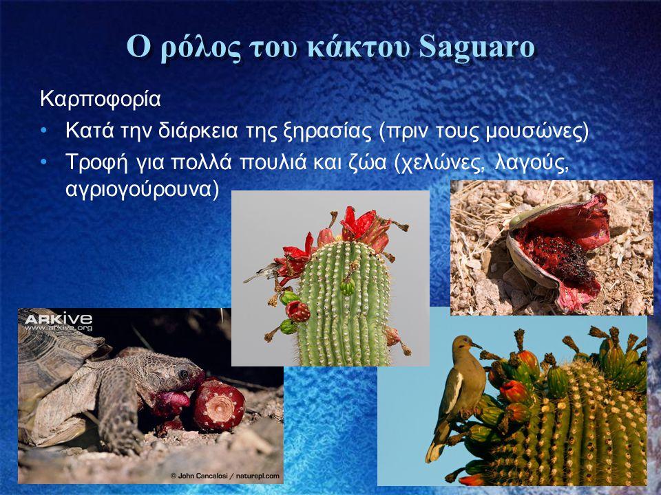 Ο ρόλος του κάκτου Saguaro