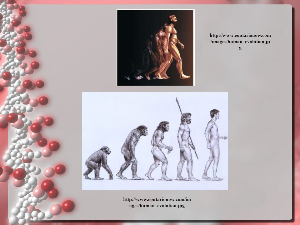 http://www.eontarionow.com/images/human_evolution.jpg http://www.eontarionow.com/images/human_evolution.jpg.