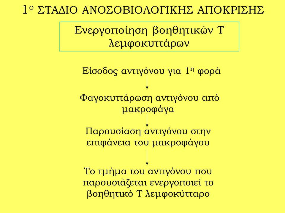 1ο ΣΤΑΔΙΟ ΑΝΟΣΟΒΙΟΛΟΓΙΚΗΣ ΑΠΟΚΡΙΣΗΣ