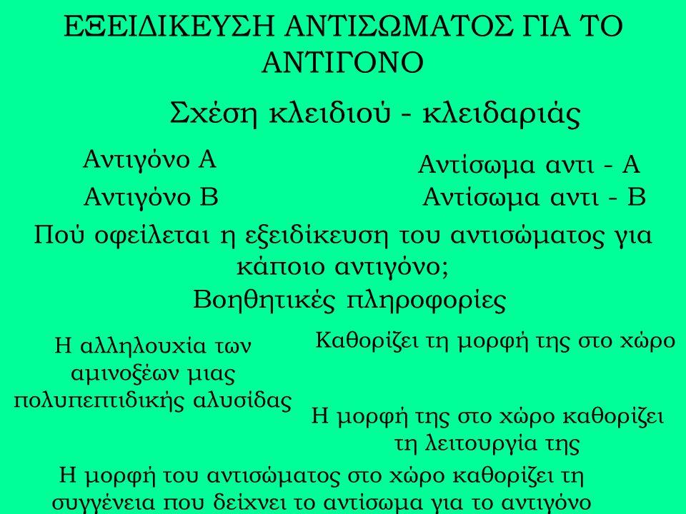 ΕΞΕΙΔΙΚΕΥΣΗ ΑΝΤΙΣΩΜΑΤΟΣ ΓΙΑ ΤΟ ΑΝΤΙΓΟΝΟ