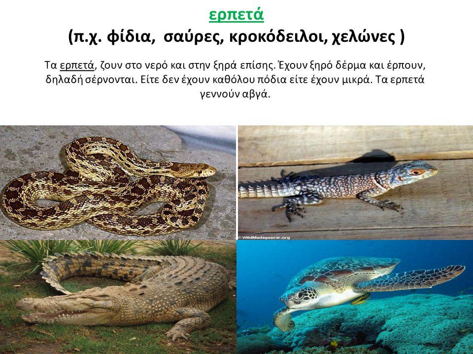 (π.χ. φίδια, σαύρες, κροκόδειλοι, χελώνες )