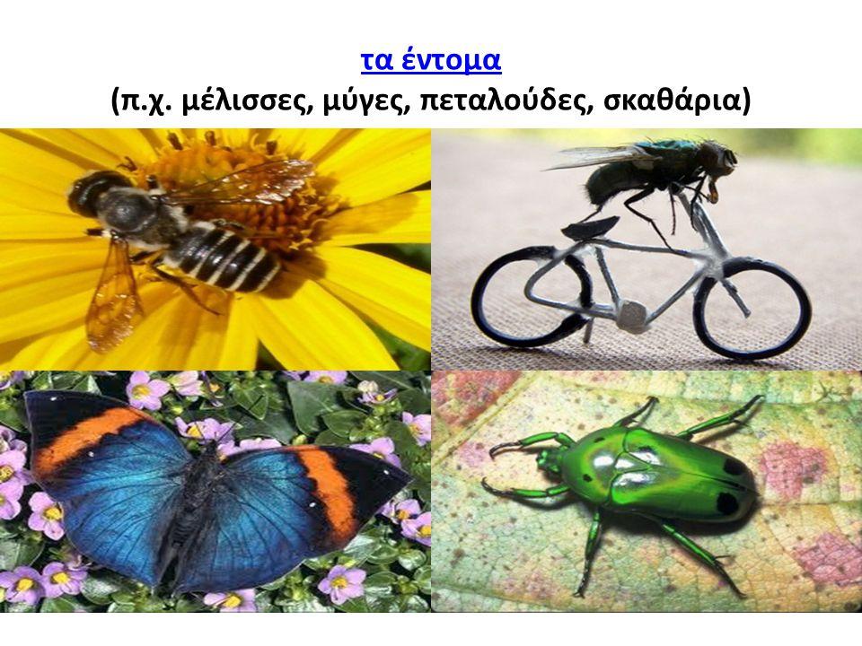 (π.χ. μέλισσες, μύγες, πεταλούδες, σκαθάρια)