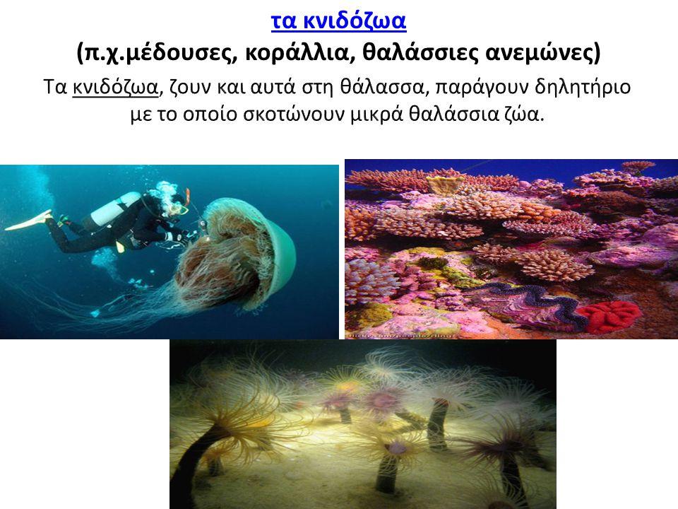 (π.χ.μέδουσες, κοράλλια, θαλάσσιες ανεμώνες)