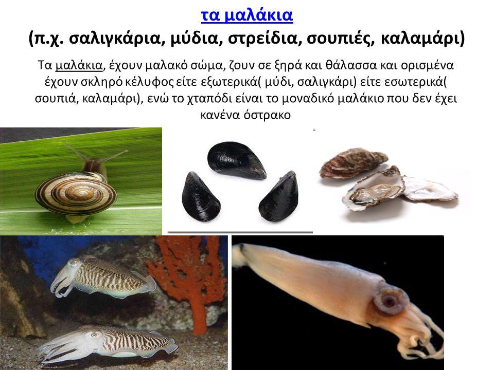 (π.χ. σαλιγκάρια, μύδια, στρείδια, σουπιές, καλαμάρι)