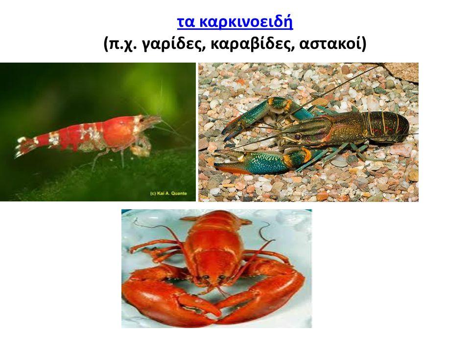 (π.χ. γαρίδες, καραβίδες, αστακοί)