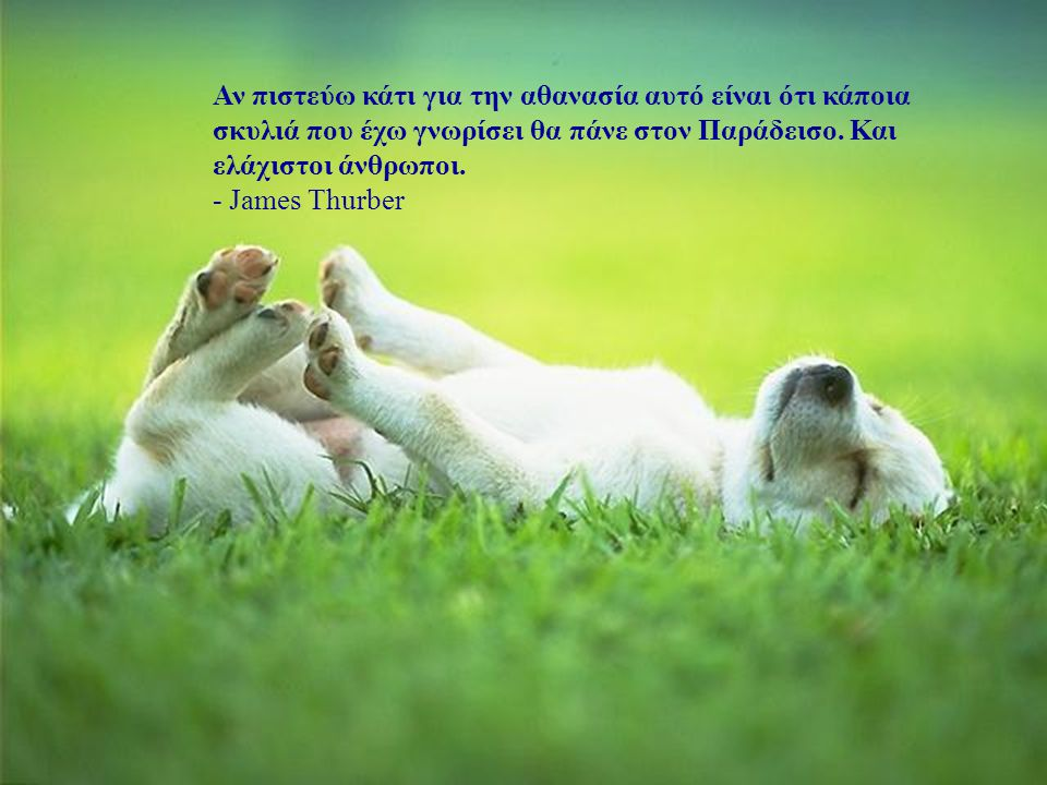 Αν πιστεύω κάτι για την αθανασία αυτό είναι ότι κάποια σκυλιά που έχω γνωρίσει θα πάνε στον Παράδεισο. Και ελάχιστοι άνθρωποι.