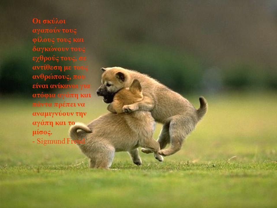 Οι σκύλοι αγαπούν τους φίλους τους και δαγκώνουν τους εχθρούς τους, σε αντίθεση με τους ανθρώπους, που είναι ανίκανοι για ατόφια αγάπη και πάντα πρέπει να αναμιγνύουν την αγάπη και το μίσος.
