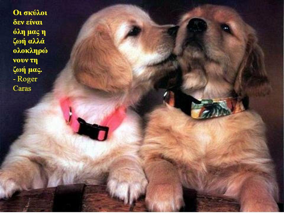 Οι σκύλοι δεν είναι όλη μας η ζωή αλλά ολοκληρώνουν τη ζωή μας.