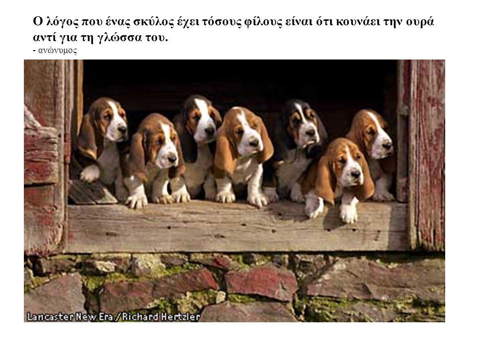 Ο λόγος που ένας σκύλος έχει τόσους φίλους είναι ότι κουνάει την ουρά