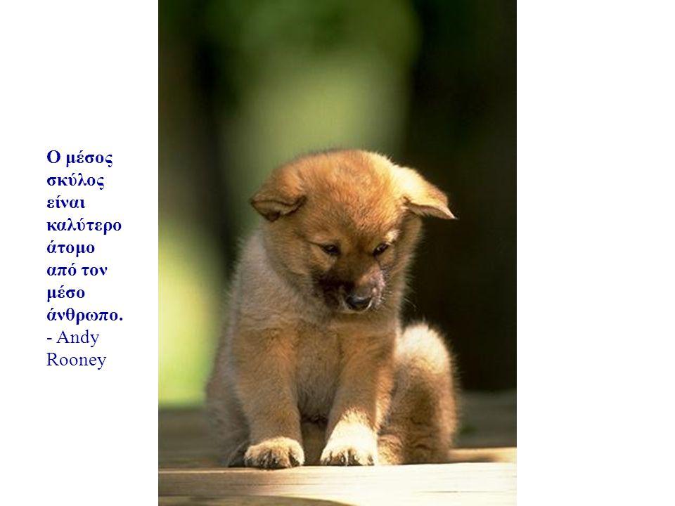 你默默的回首 Ο μέσος σκύλος είναι καλύτερο άτομο από τον μέσο άνθρωπο.