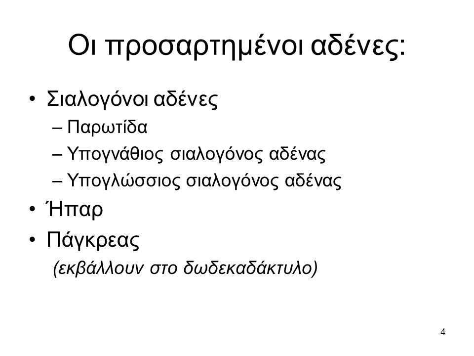 Οι προσαρτημένοι αδένες: