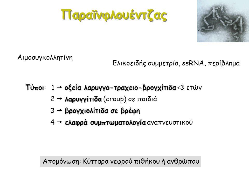 Παραϊνφλουέντζας Αιμοσυγκολλητίνη
