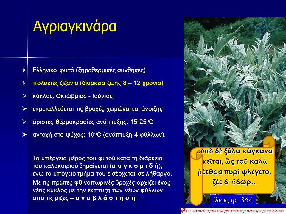 Αγριαγκινάρα ..ὑπὸ δὲ ξύλα κάγκανα κεῖται, ὣς τοῦ καλὰ