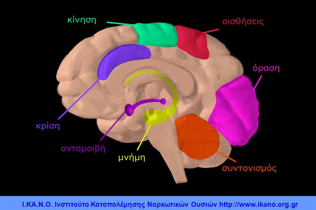 Περιοχές του εγκεφάλου και οι λειτουργίες τους