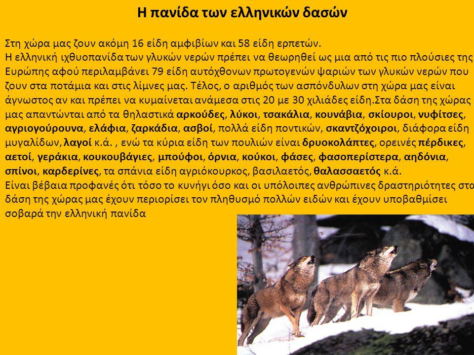Η πανίδα των ελληνικών δασών