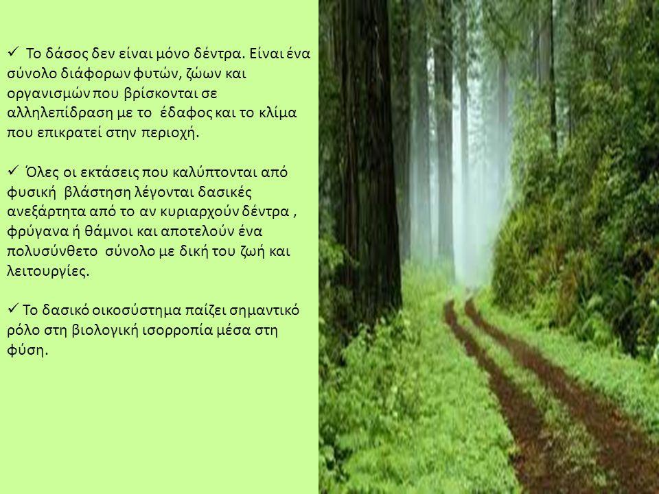 Το δάσος δεν είναι μόνο δέντρα