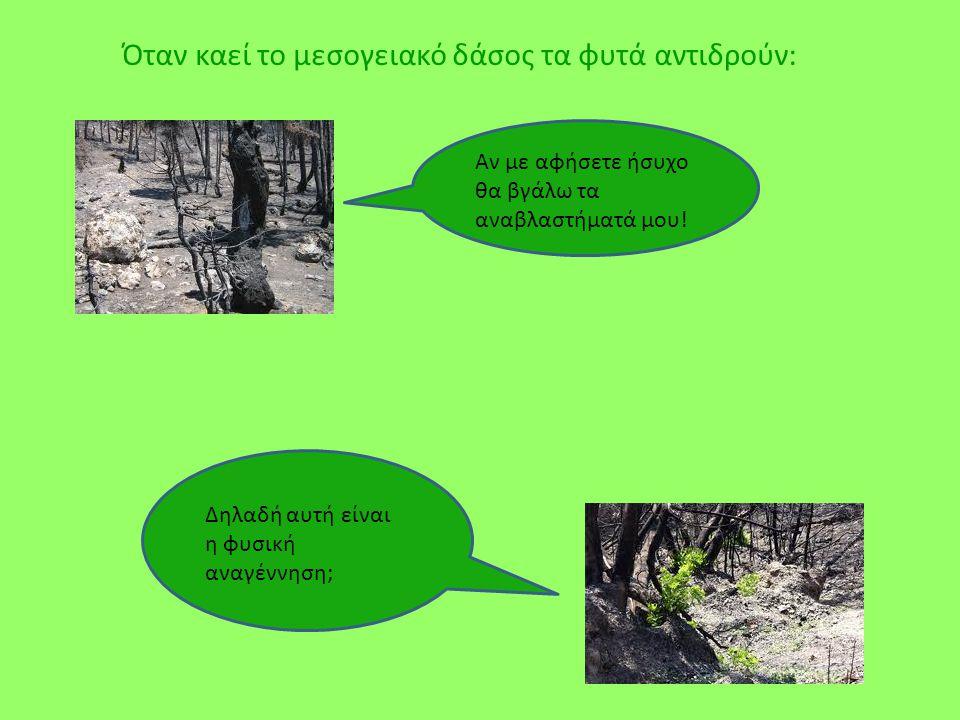 Όταν καεί το μεσογειακό δάσος τα φυτά αντιδρούν: