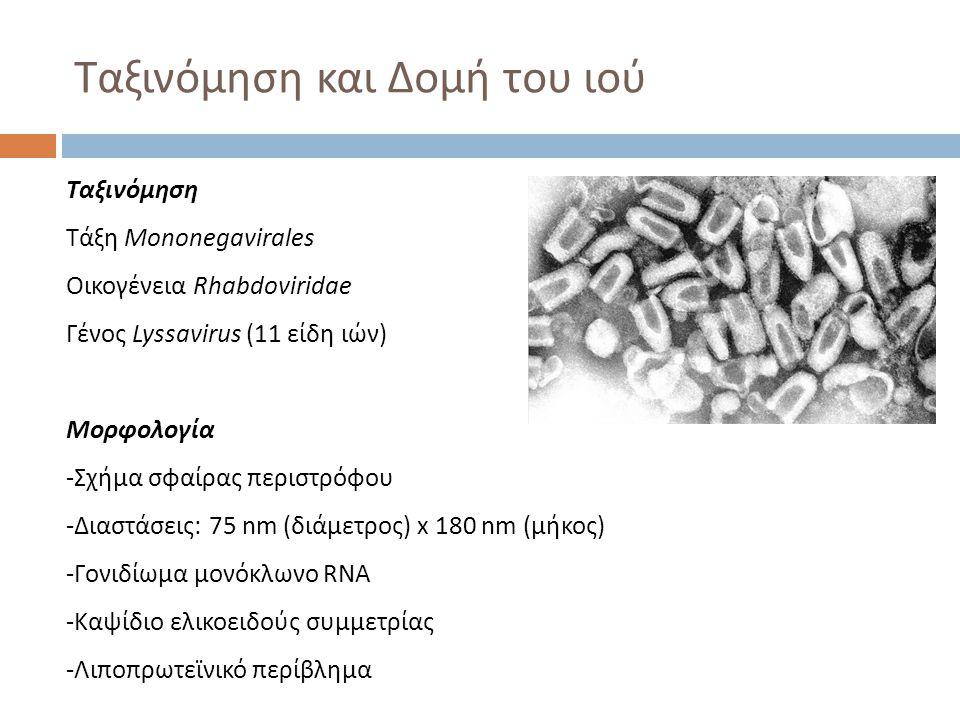 Ταξινόμηση και Δομή του ιού