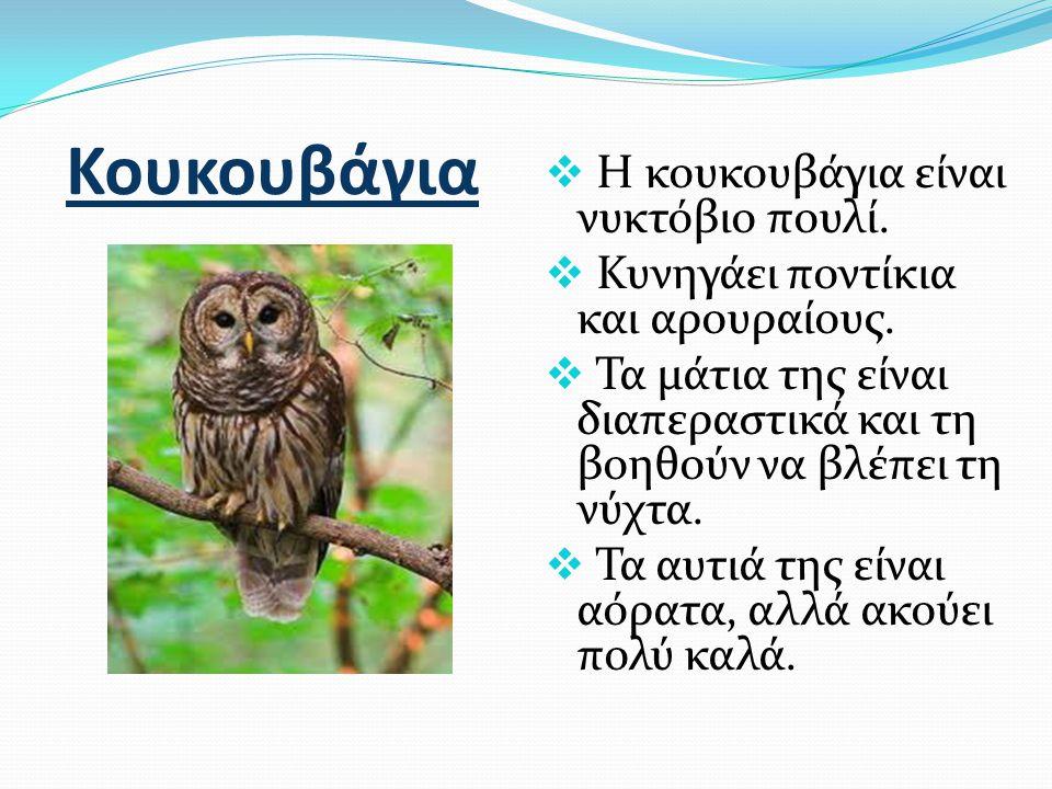 Κουκουβάγια Η κουκουβάγια είναι νυκτόβιο πουλί.