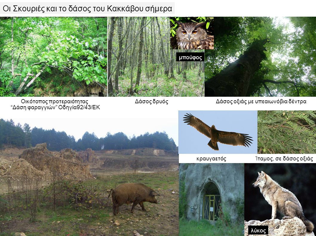 Οι Σκουριές και το δάσος του Κακκάβου σήμερα