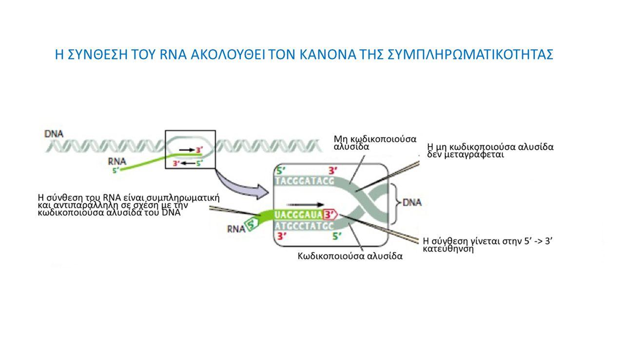 Η ΣΥΝΘΕΣΗ ΤΟΥ RNA ΑΚΟΛΟΥΘΕΙ ΤΟΝ ΚΑΝΟΝΑ ΤΗΣ ΣΥΜΠΛΗΡΩΜΑΤΙΚΟΤΗΤΑΣ