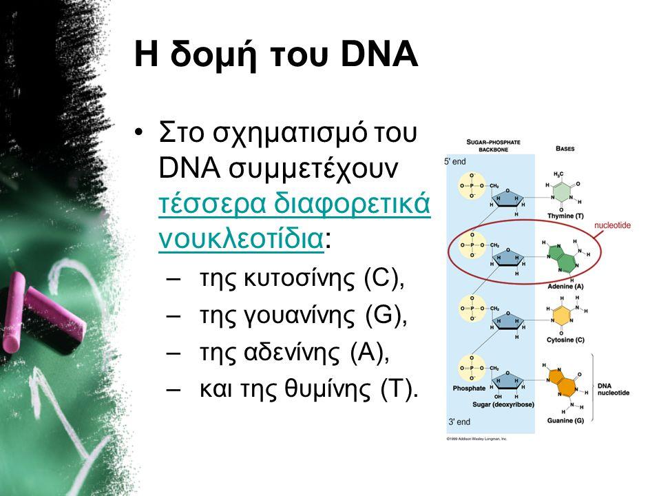 Η δομή του DNA Στο σχηματισμό του DNA συμμετέχουν τέσσερα διαφορετικά νουκλεοτίδια: της κυτοσίνης (C),