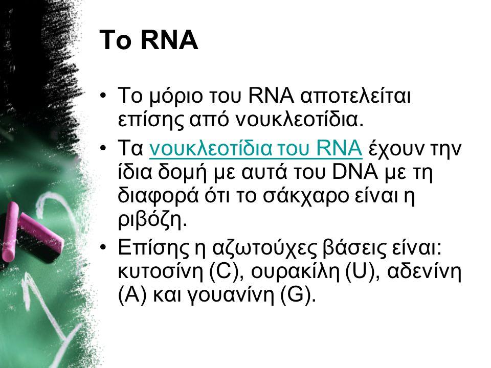 Το RNA Το μόριο του RNA αποτελείται επίσης από νουκλεοτίδια.
