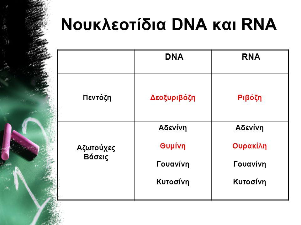 Νουκλεοτίδια DNA και RNA